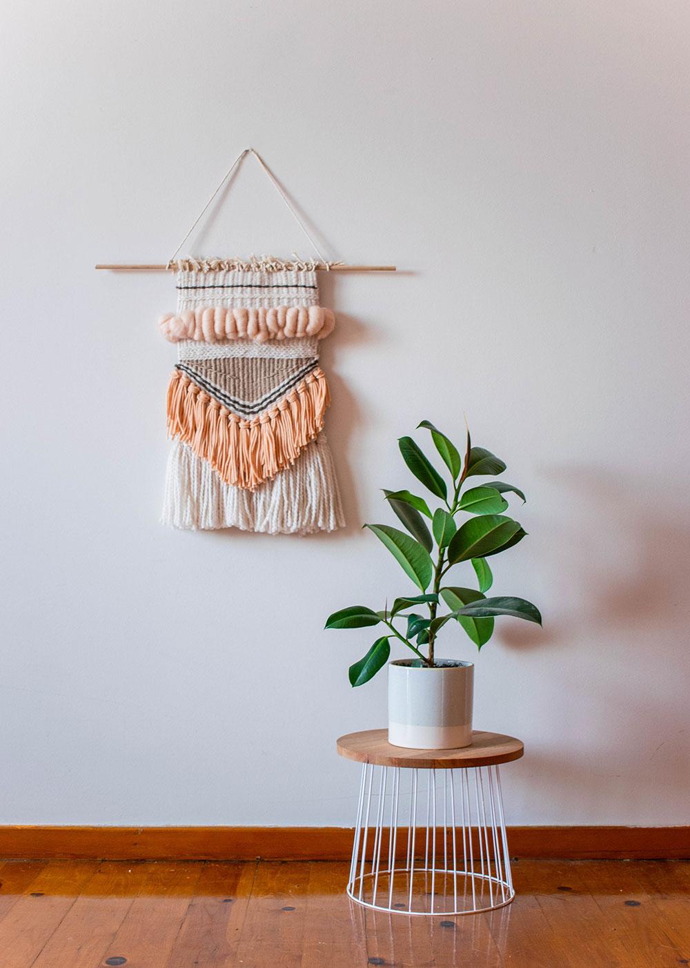 Ashinyday-φυτά-εσωτερικού-χώρου-φικος-1