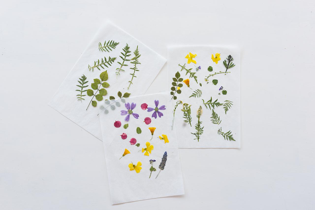 Ashinyday.com-αποξήρανση-λουλουδιών