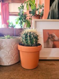 Ashinyday-φυτά-εσωτερικού-χώρου-κακτοι